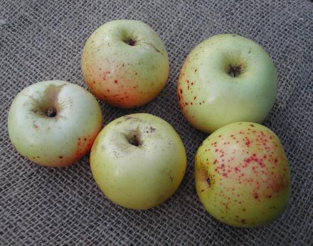Boerma Appel