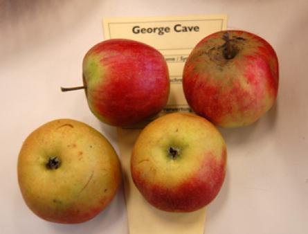 George Cave
